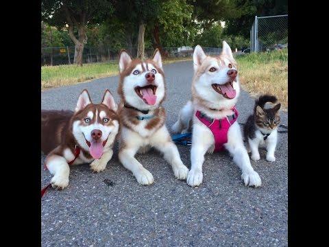 31766 - Creo que hay un infiltrado en esta manada de perros de paseo
