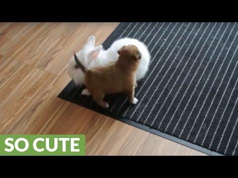 il-cucciolo-che-gioca-con-il-coniglio
