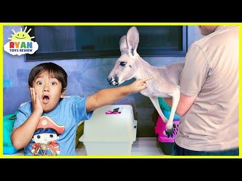 Meet Ryan's New Pet Kangaroo!!!!