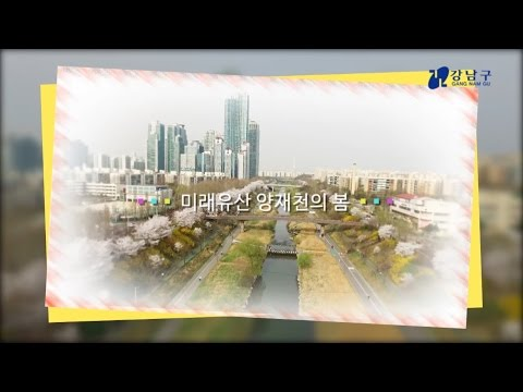 강남, 공감 1분 - 미래유산 양재천의 봄