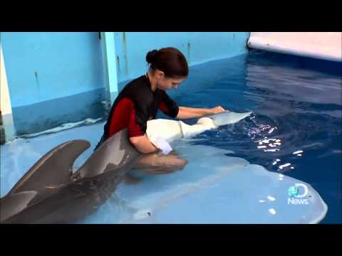 Dolphin Tale: How Real is Winter's Story?