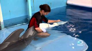 Nonton Dolphin Tale  How Real Is Winter S Story  Film Subtitle Indonesia Streaming Movie Download