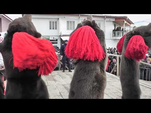 Ursul de la Darmanesti 2010-2011 - Ceata Pagubenarilor