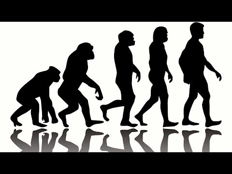 Facts - We've gone from living in trees to living on YouTube in just a few millennia. We explore the weird and wonderful facts behind human evolution Music = Blowgun...