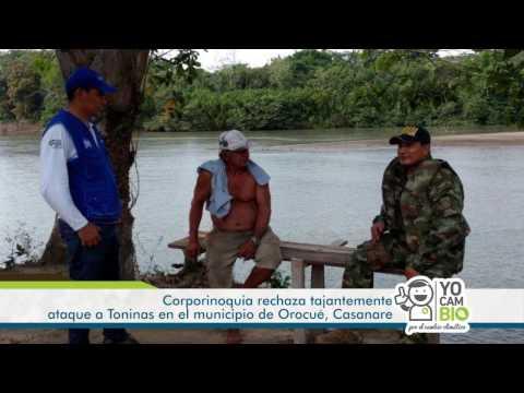 Pronunciamiento de Corporinoquia sobre ataque a Toninas en Orocué, Casanare