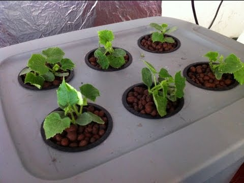 Home made Deep water hydroponic system for $35 Easy
