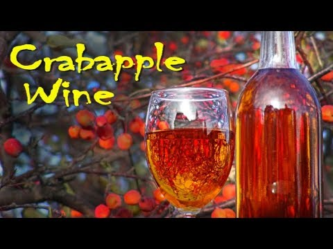 Making Crabapple Wine At Home