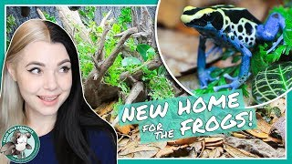New Bioactive DART FROG Vivarium!