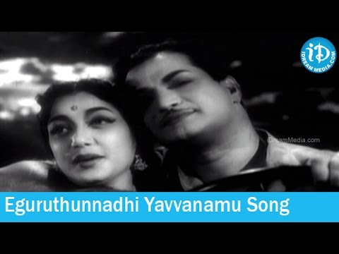 Eguruthunnadhi Yavvanamu Song - Dorikithe Dongalu Movie Songs - NTR - Kantha Rao - Jamuna