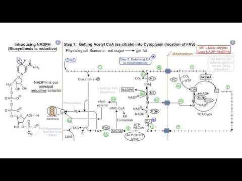 Fatty Acids and Lipid Biosynthesis