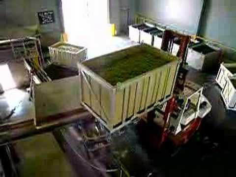 Wine Production Process