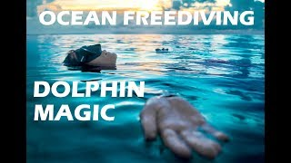 Dolphin dream with Lidija Lijic