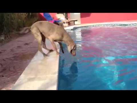 狗狗飛盤掉進水池裡,快看看他這些超可愛、超拼命的舉動!
