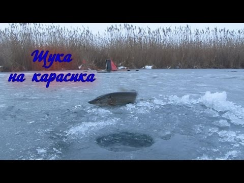 Ловля Щуки  На Жерлицу Зимой На Карасика (Видео Отчот)  // Pike Fishing Winter - Рыбалка На Щуку