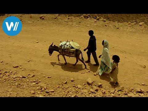 Eritrea - Ein Esel für die Zukunft (360° - GEO Reportage)