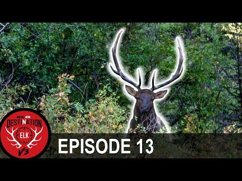 Right Place, Right Time (Destination Elk V3 - Episode 13)