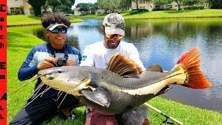 Video RARE GIANT Redtail CATFISH Caught in TOWN CENTER! MP3, 3GP, MP4, WEBM, AVI, FLV Agustus 2019