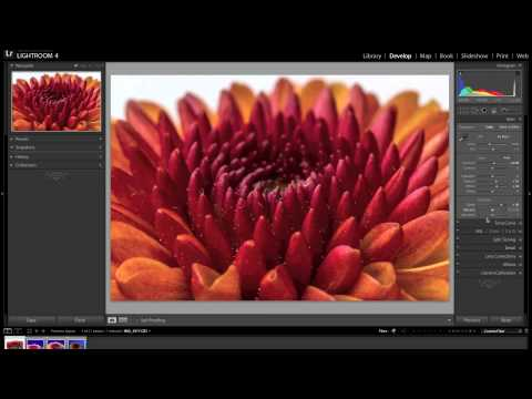 Macro Photography Tutorial using Flash