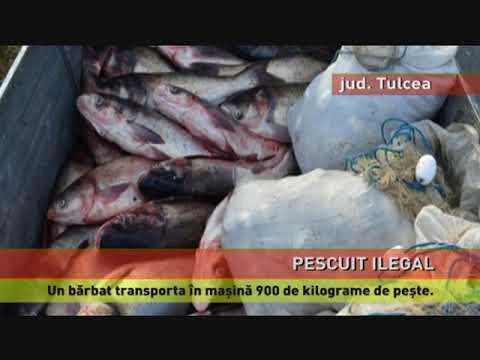 900 de kg de pește pescuit ilegal, confiscate