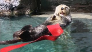 The Worlds Happiest Otter