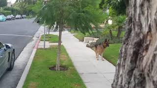 Właściciel postanowił schować się przed swoim psem na spacerze. Reakcja zwierzaka była bezbłędna!