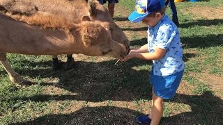 Saturdays at QCamel dairy: An afternoon full of fun & learning for young and old