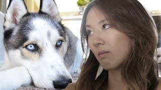 Video When Your Dog Is Better Looking Than You MP3, 3GP, MP4, WEBM, AVI, FLV Januari 2018