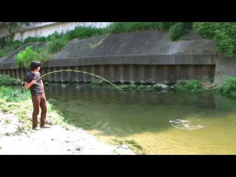 鯉�フライフィッシング/carp on the fly fishing!!(JVC GZ HD7)