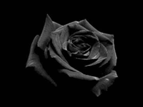Opeth - Black Rose Immortal Lyrics (Video)
