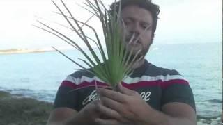 Come costruire una fiocina naturale vidinfo for Costruire una casa sulla spiaggia su palafitte