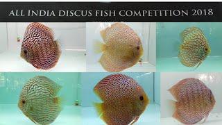 Nonton Discus Fish Competition 2018 India Film Subtitle Indonesia Streaming Movie Download
