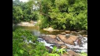 Endau Malaysia  city pictures gallery : Endau Rompin National Park - Tourist Attractions in Malaysia