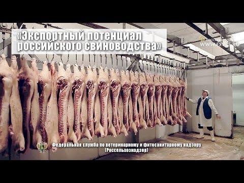 Экспортный потенциал российского свиноводства