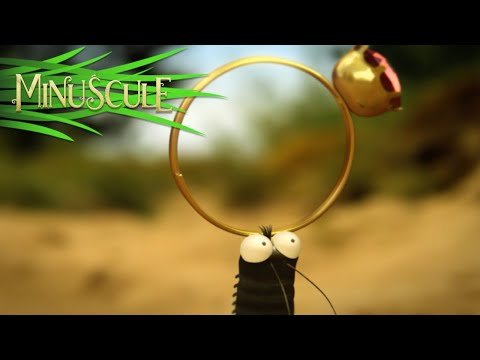 Minuscule - Valentine's Day / La Saint Valentin (Season 2) (видео)