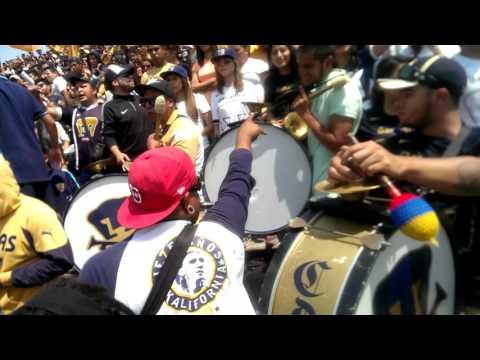 A la unam pasion infinita.. PUMAS vs ch1bAs j12 ap - La Rebel - Pumas - México - América del Norte