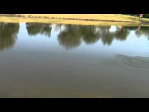 Turkey Lake - watch in HD......vinnerbaits wavefishing.