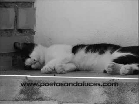 Poetas Andaluces, Canción tonta, Federico García Lorca,