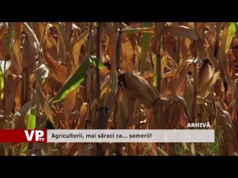 Agricultorii, mai săraci ca… șomerii!