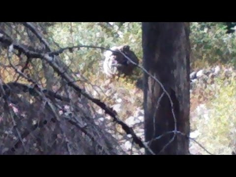 Mother & Baby Bigfoot Caught on Camera
