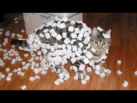 Funny cat videos - CAT VIDEOS 2018  FUNNIEST VIRAL CAT VIDEOS