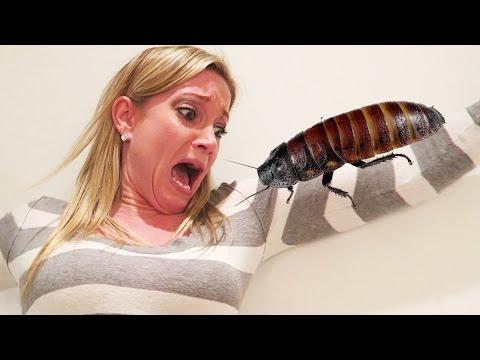 男子在愚人節時用「活生生的巨大蟑螂」惡搞女友...有哪個女孩能夠忍住不分手呢?