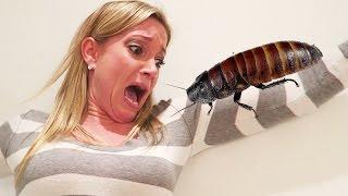 فيديو (كذبة أبريل) المليئة بالصراصير يحصد 3 ملايين مشاهدة