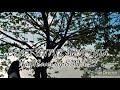 Download Lagu Benci Untuk Mencinta ( Naif Cover by SMVVL lirik) Mp3 Free