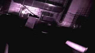 Night time Guinea Pig time-lapse- With Raspberry Pi and Pi NoIR camera module - 20/12/13