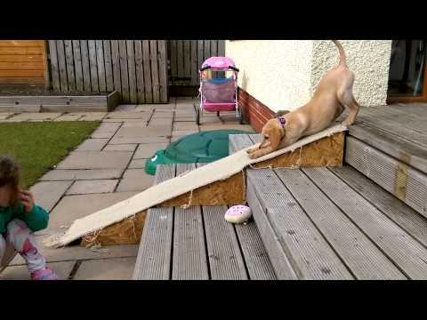 divertentissima scivolata del cucciolo