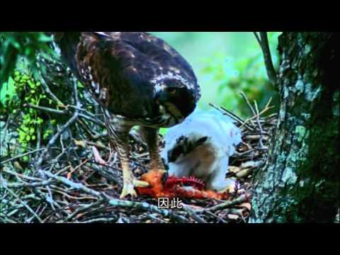 繽紛丹巒II-丹大野生動物重要棲息環境珍稀野生動物簡介