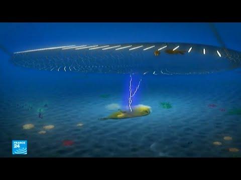 العرب اليوم - شاهد: جدل بشأن صيد الأسماك بالصعق الكهربائي في بحر الشمال
