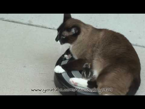Roomba Drivers Cat VS. Baby Chick