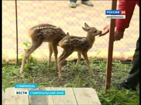 Бэби-бум зоопарк ГТРК