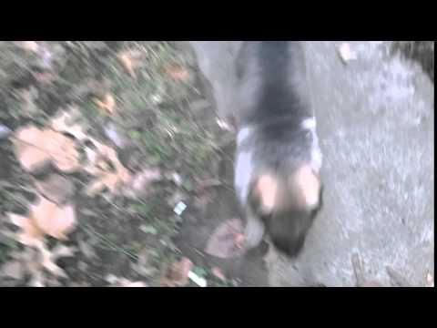 Wayas Mr. Mocha Video 1